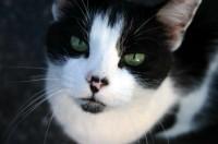 stray cat photo